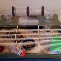 Hamester with cage
