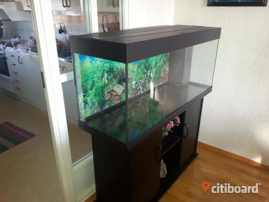 akvarium juwel 240 liter stersund citiboard. Black Bedroom Furniture Sets. Home Design Ideas